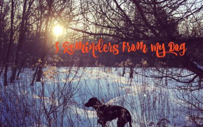 5 Reminders From My Dog